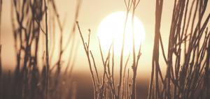Litha Sabbat Image - Sunrise through foliage