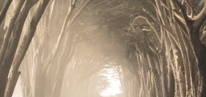 Earth Element Magic Blog Post Image